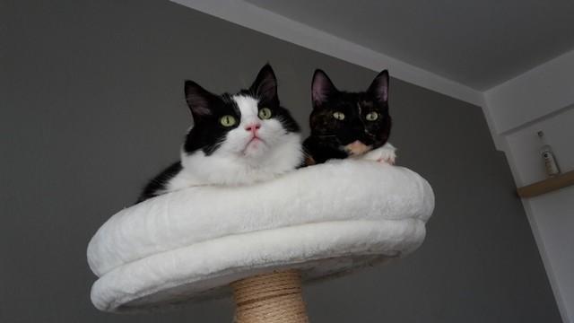 müssen katzen geimpft werden